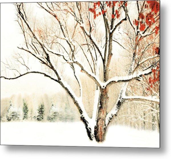 Oak Tree In Winter Metal Print by Dorothy Walker