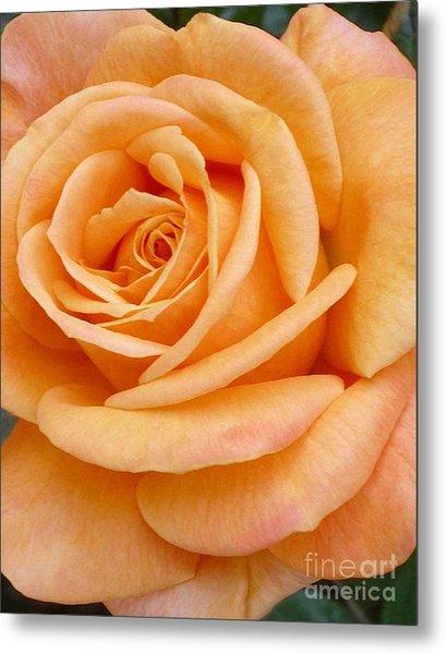 Orange Rose Blossom Special Metal Print