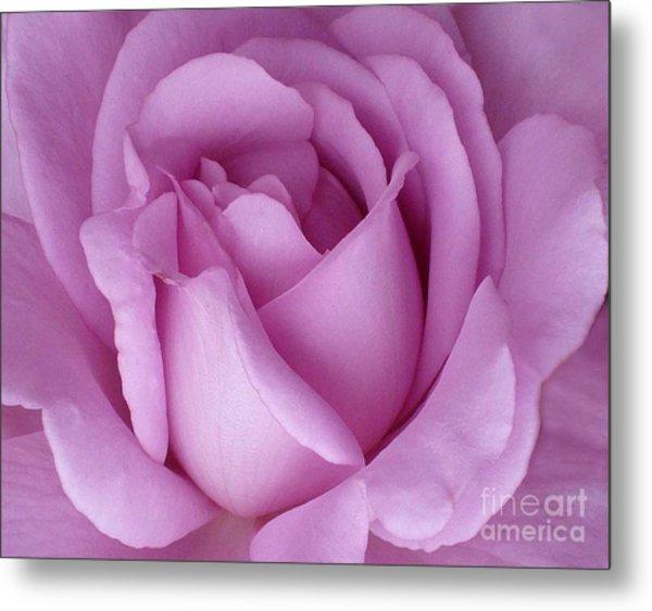 Pale Magenta Rose Metal Print