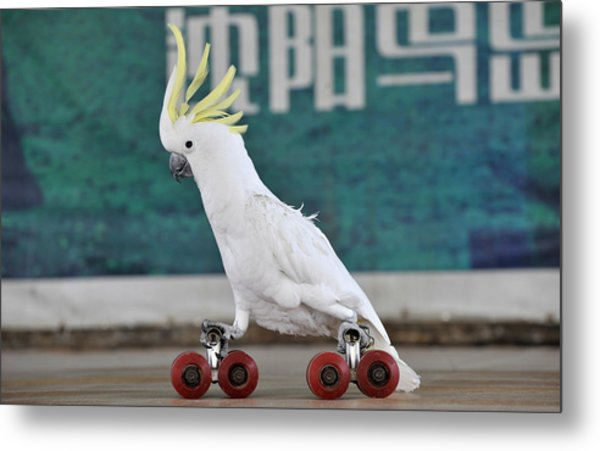 Parrots Performance To Celebrate May May Holiday Metal Print by China Photos