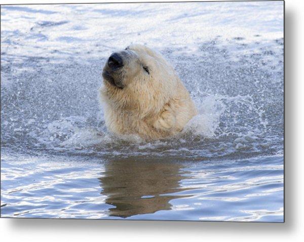 Polar Bear Metal Print by Andrew Dernie