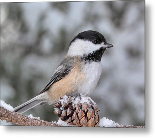 Sitting On A Snow Cone Metal Print