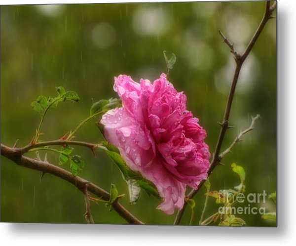Spring Showers Metal Print