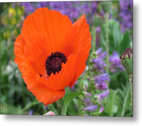 Stand Out Metal Print