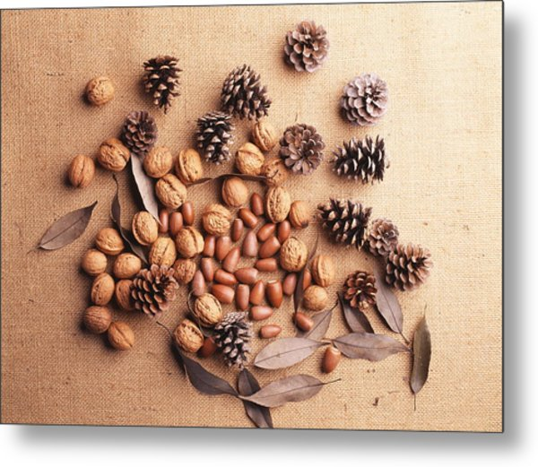 Still Life Of Pine Cones, Walnuts And Acorns Metal Print by GYRO PHOTOGRAPHY/amanaimagesRF