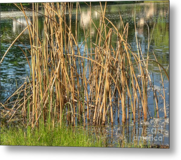 Swamp Grass Metal Print by Deborah Smolinske