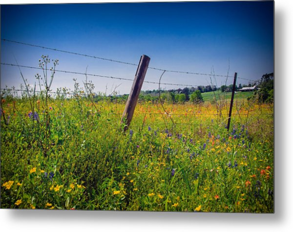 Texas Spring Fling Metal Print