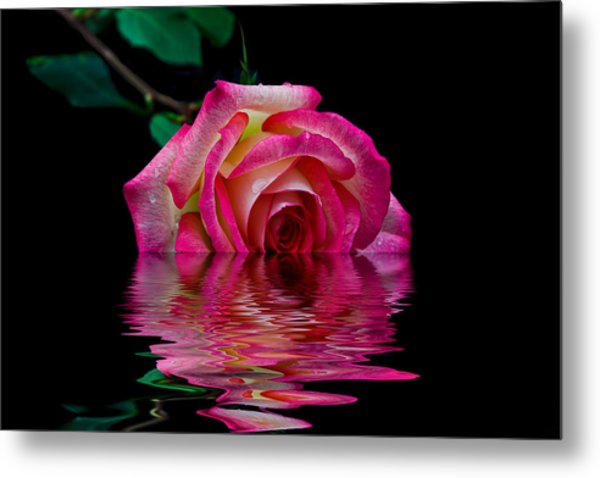The Floating Rose Metal Print