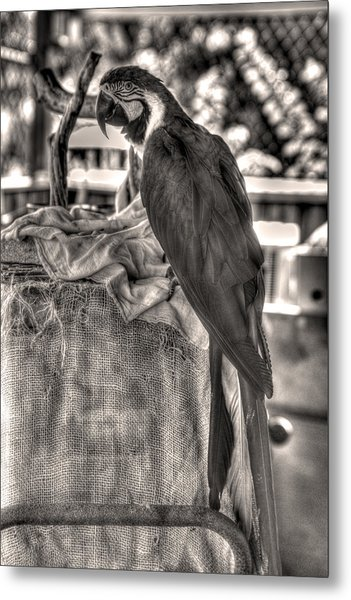 Up At The Blue Parrot Metal Print