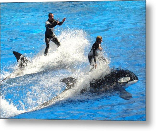 Whale Racing Metal Print