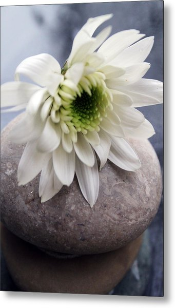 White Blossom On Rocks Metal Print