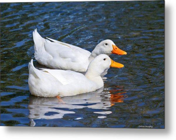 White Pekin Ducks #2 Metal Print
