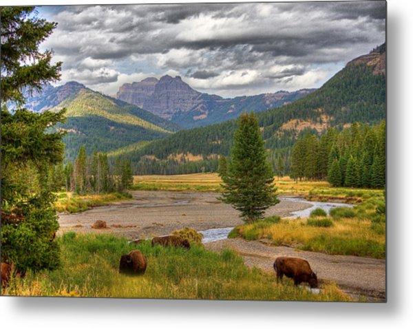 Yellowstone Bison Metal Print by Michael H Spivak