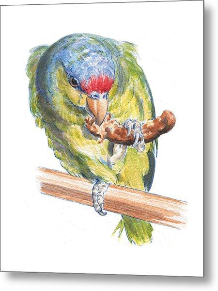 Parrot Eating Toast Metal Print by Maureen Carter