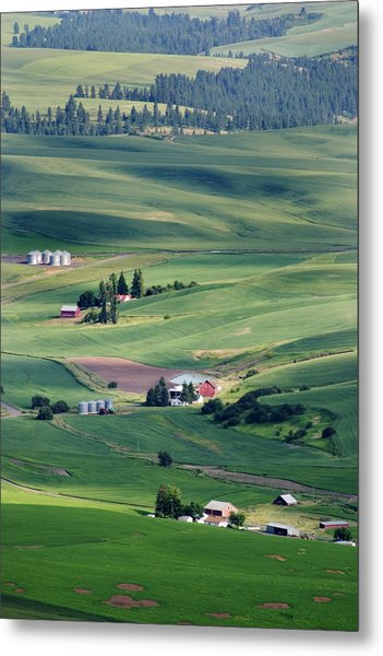 Wheatfields In Rural Washington State Metal Print by Carl Purcell