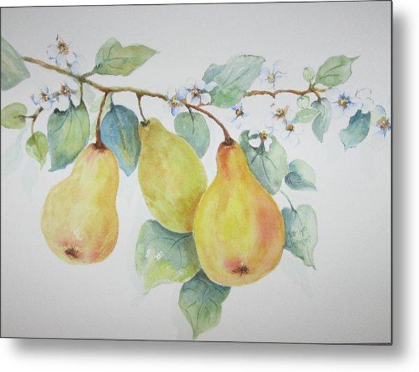 3 Pears Metal Print