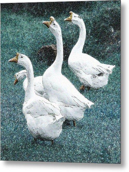 4 Ducks Metal Print
