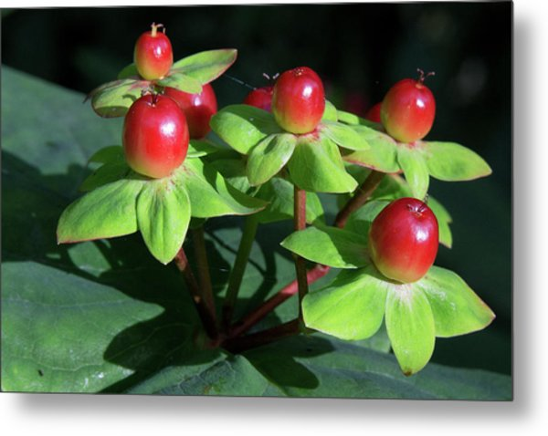 Berry Pretty Metal Print