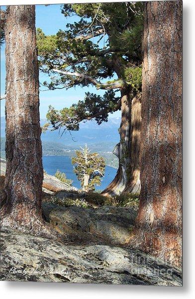 Big Trees Little Tree Metal Print