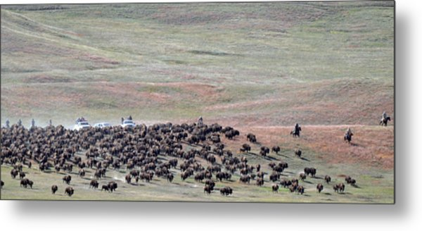Buffalo Round-up Metal Print