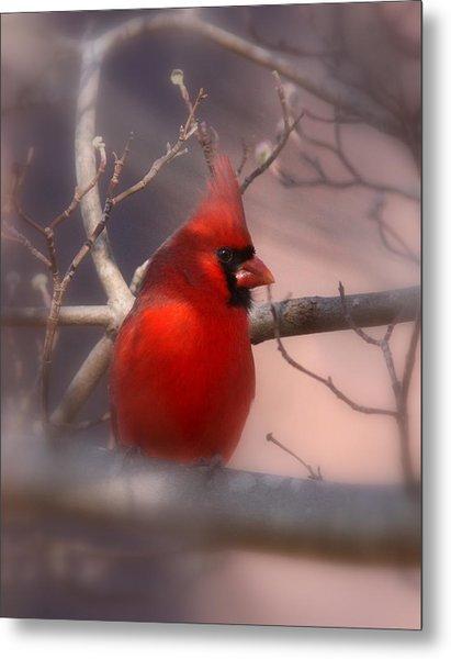 Cardinal - Unafraid Metal Print