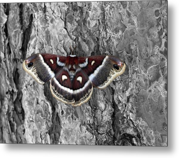 Colorful Moth Metal Print