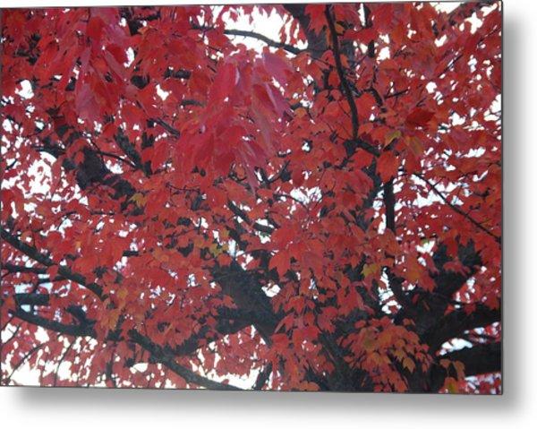 Crimson Leaves Metal Print
