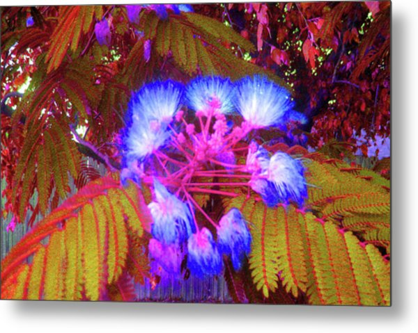 Electric Mimosa Metal Print by Juliana  Blessington