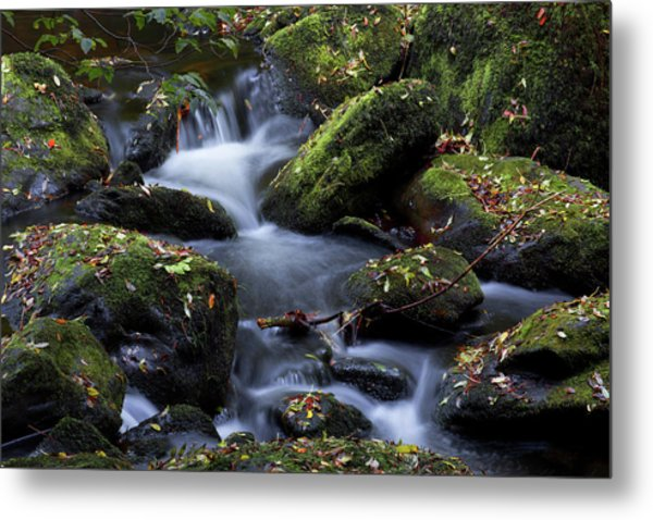 Fall Colors Of The Vartry Metal Print
