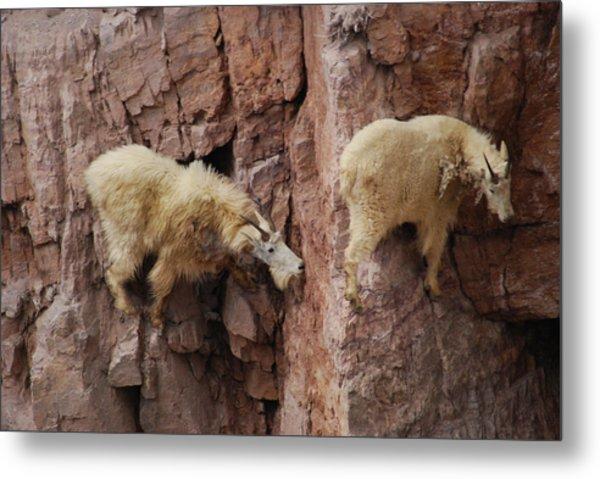 Goats On Rocks Metal Print