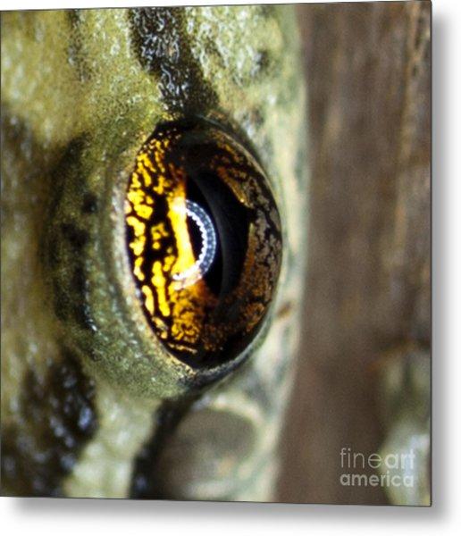 Golden Eye Metal Print