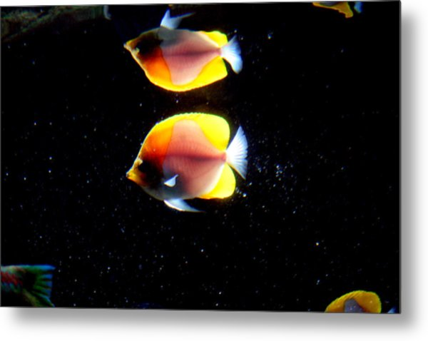 Golden Fish Reflection Metal Print
