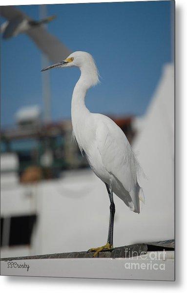 Great White Egret 2 Metal Print