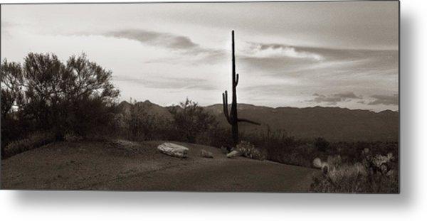 Lonely Cactus Metal Print