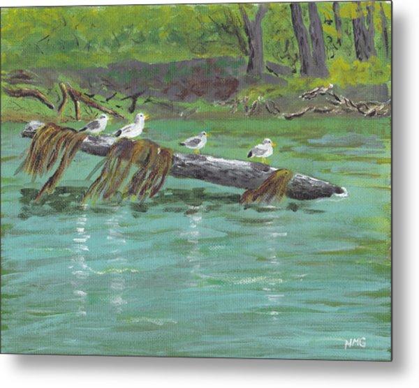 Mississippi River Gulls Metal Print by Nicole Grattan