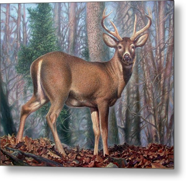 Missouri Whitetail Deer Metal Print