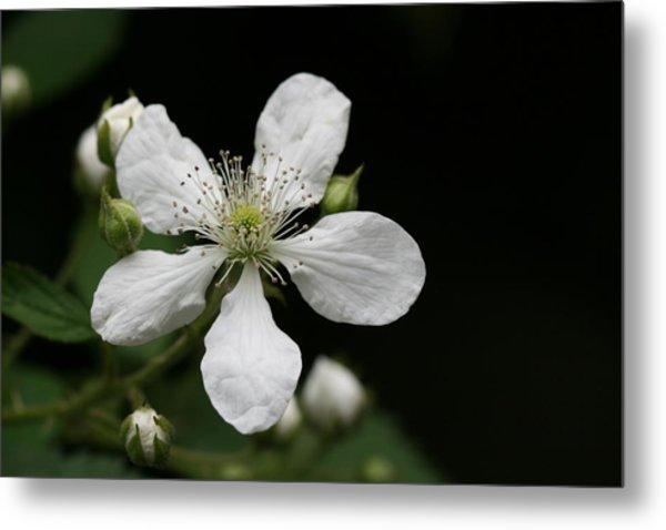 Mysterious Pretty White Flower Metal Print by Bonnie Boden