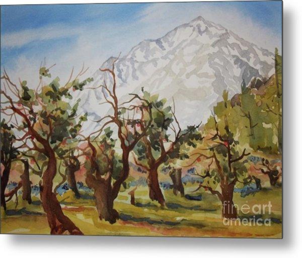 Old Apple Orchard Mt Tom View Metal Print