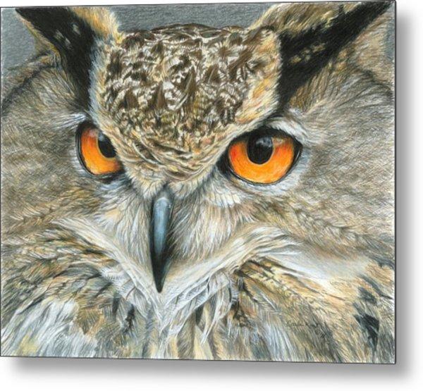 Orange-eyed Owl Metal Print