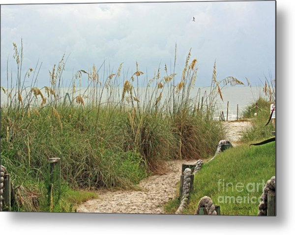 Pathway To The Gulf Metal Print