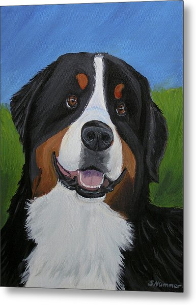 Portrait Of A Bernese Mountain Dog Metal Print