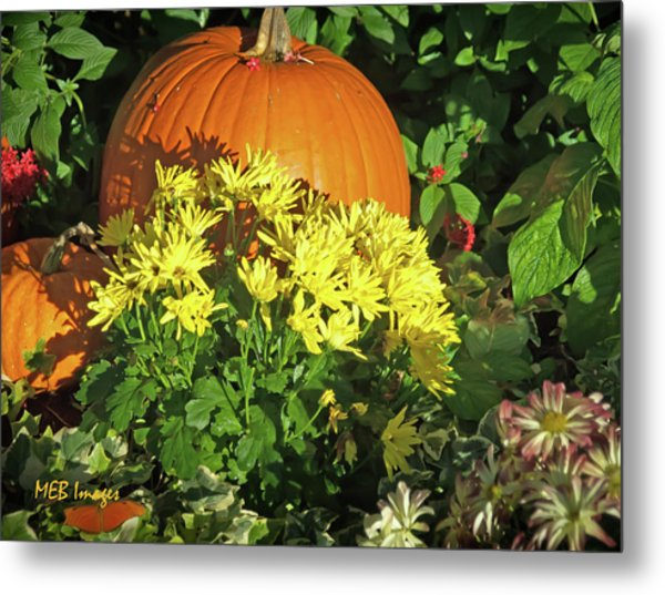 Pumpkins And Mums Metal Print