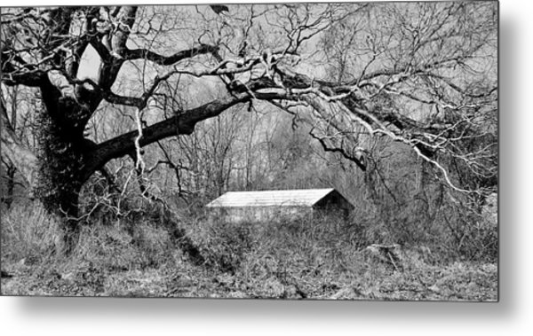 Relax Under My Tree Metal Print