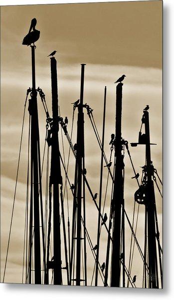 Shem Creek Birds Metal Print