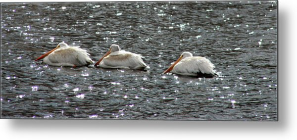 Sitting Out The Storm In Evergreen Colorado Metal Print