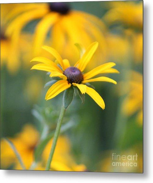 Sunny Flower - 2 Metal Print by Marilyn West