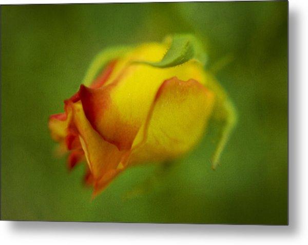 The Yellow Rose Metal Print