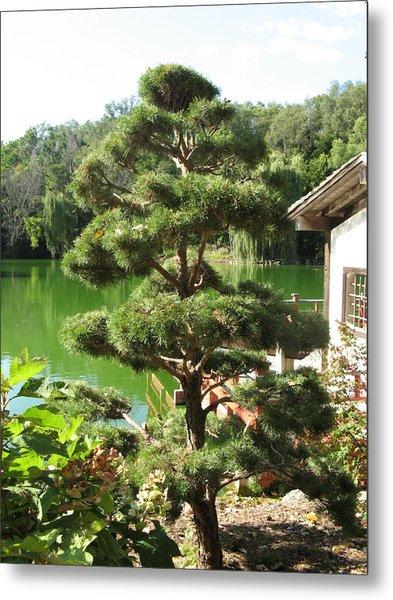 Tree Before Pond Metal Print