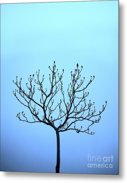 Tree With The Blues Metal Print