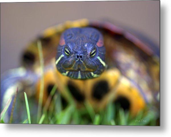 Turtle Beauty Metal Print